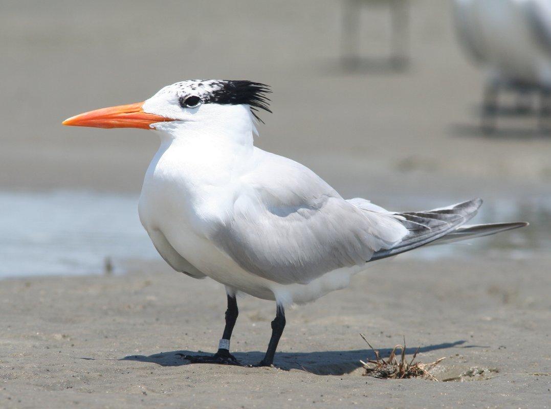 Bird Photography Of Myrtle Beach South Carolina